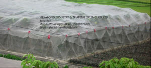 Anti-Insect 40 Mesh HDPE Greenhouse Net pictures & photos