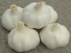 2016high Quality Fresh Vegetables Garlic
