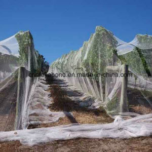 Agriculture Apple Tree Anti Hail Net pictures & photos