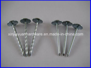 Galvanized Roofing Nail with Umbrella Head pictures & photos