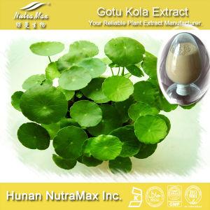 100% Natural Gotu Kola Extract (Asiaticoside 10%~ 90%) -GMP Factory Supply