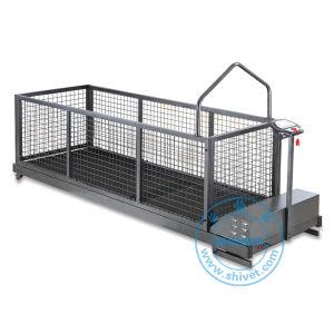Big Dog Treadmill (TM-260ML) pictures & photos