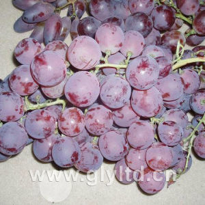 Good Quality of Fresh Sweet Red Global Grape pictures & photos