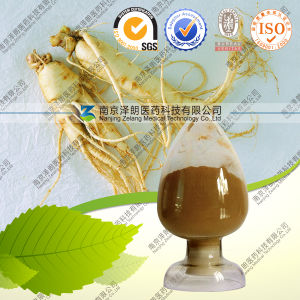 Panax Ginseng Leaf Extract 20% UV pictures & photos