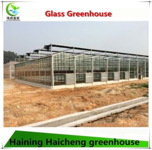 Multi-Span Agricultural Film Greenhouse for Lettuces pictures & photos