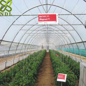 Tunnel Greenhouse for Vegetable Planting pictures & photos
