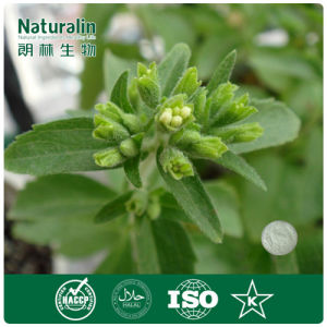 Pure Natural Stevia Extract Hot Selling Stevia Extract Powder with 90% Steviosides
