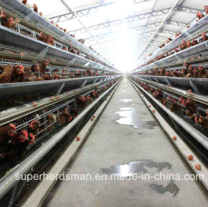 Automatic Chicken Cage Farm for Layers with SGS Cetification pictures & photos