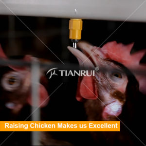 Tianrui Automatic Poultry Drinking System For Laying Hens pictures & photos