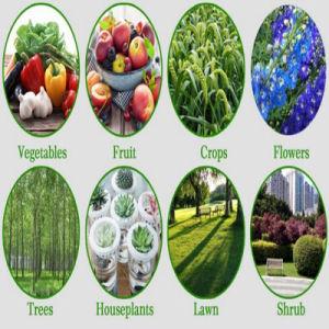 Fertilizer Diammonium Phosphate DAP 64% pictures & photos