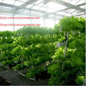 High Quality PVC Pipe for Hydroponic pictures & photos