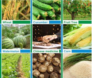Potassium Sulfate Sop Potassium Sulphate for Agricultural Fertilizer pictures & photos