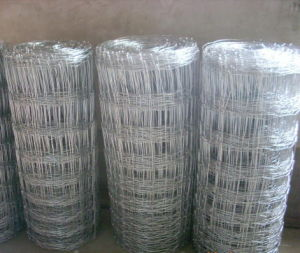 Galvanized Iron Knotted Wire Mesh Field Fence (anjia-525) pictures & photos