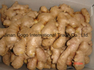 Air-Dried Ginger (100g; 150g; 200g; 250g; 300g; 350g) pictures & photos