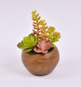 Artificial Mini Succulent in Round Shape Paper Mache Pot for Decoration pictures & photos