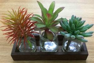 Set of 3 Artificial Succulent Plants with Transparent Glass Pots for Decoration pictures & photos
