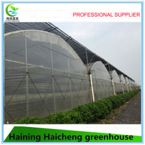 New Style Agricultural Plastic Film Commercial Greenhouse pictures & photos