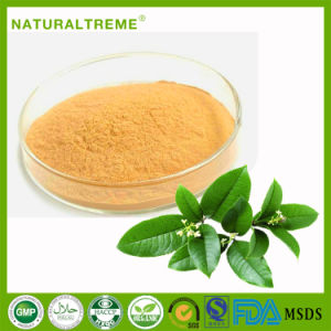 GMP Factory 100 Mesh Green Tea Extract 50% Poiyphenols pictures & photos