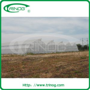 Tomato Vegetable Greenhouse for Sale pictures & photos