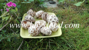 Dried White Flower Mushroom Dehydrated Vegetable pictures & photos