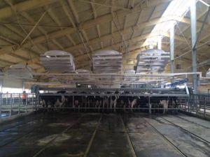 Vhv72-2016 Positive Presure Fan Dairy Barn Equipment Ventilation Fan pictures & photos