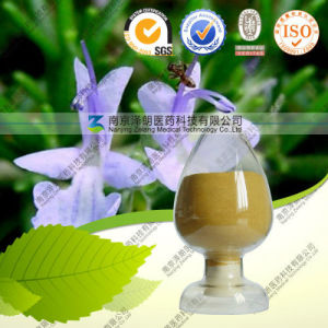 Natural Rosmary Extract 30% Rosmarinic Acid for Natural Antioxidant