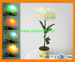 Color Changing Solar Power Flower Light as Rose Shape pictures & photos