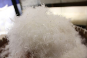 Snowman 40% White Duck Down with RDS Certification pictures & photos