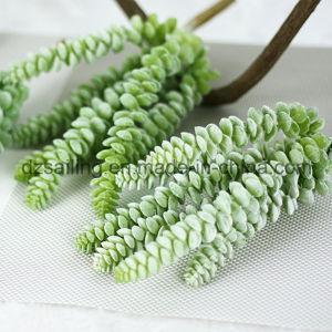 Decorative Plant Natural Touch Artificial Succulents Artificial Flower (SW17662) pictures & photos