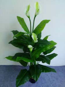 Artificial Flowers of Calla Lily 27 Latex Lvs. 4 Calla Lily Flowers pictures & photos