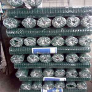 6X6 Inch PVC Coated Welded Wire Mesh pictures & photos