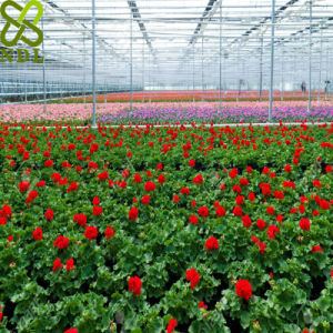 Multi Span Agricultural Double Layer Hollow Glass Greenhouse pictures & photos