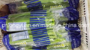Chinese Fresh Celery with Carton Packing pictures & photos