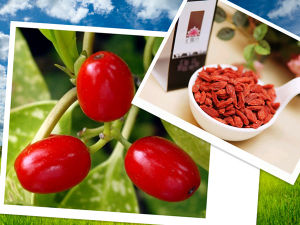 Dried Goji Berries From Ningxia (480grains per 50g) pictures & photos