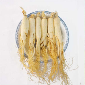 High Quality Ginseng Extract Ginsenoside RF HPLC 98% with Best Price pictures & photos