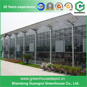 Durable Film Roof Glass Wall Greenhouse for Planting Vegetables pictures & photos