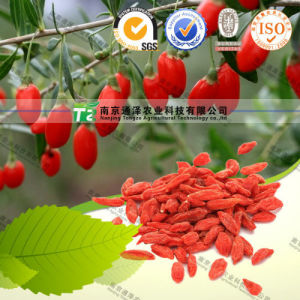 Manufacturer Supply Herb Medicine Barbary Wolfberry Fruit Goji Berry pictures & photos
