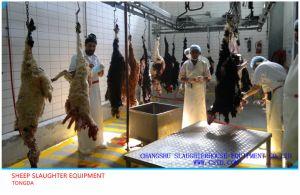 Slaughterhouse Equipment pictures & photos