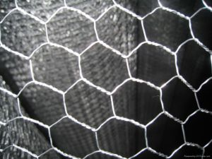 Hexagonal Wire Netting (FHSD-1091) pictures & photos