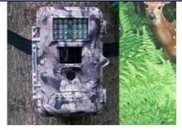 Wildlife Camera (ML-560)