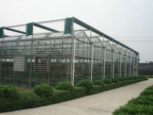 Multi Span Hollow Glass Greenhouses for Flower Growing pictures & photos