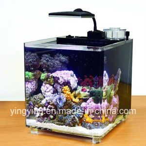 2017 Best Selling Acrylic Fish Tank pictures & photos
