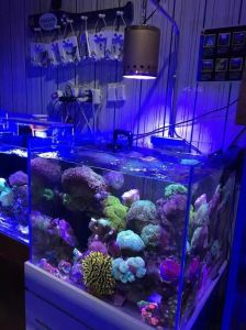 Wholesale Epistar Dimmable Aquarium LED for Coral Reef pictures & photos