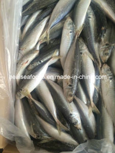 Best quality Frozen Yellow Tail Scad pictures & photos
