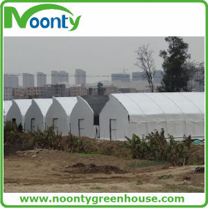 Tunnel Hydroponic Plastic Film Greenhouse pictures & photos