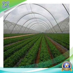 HDPE with UV 20%-40% Shade Net pictures & photos