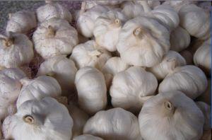 Garlic (21)