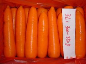 Fresh Carrot of Size 3l