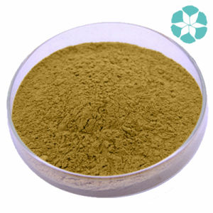 Dandelion Root Extract / Taraxacum Officinale Extract / Flavones pictures & photos