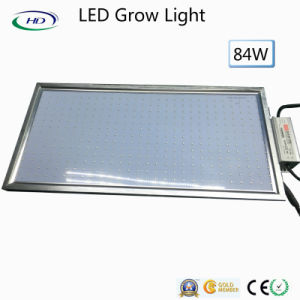 84W LED Grow Light Panel 300*600*15mm pictures & photos